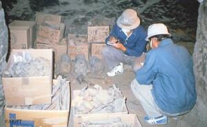 約200体のミイラや人骨を整理する調査隊員