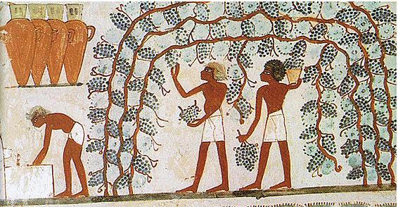 古代エジプトの食:食べ物をめぐ...